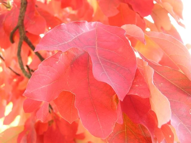 Red Autumn 1
